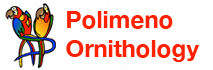 Polimeno Ornithology